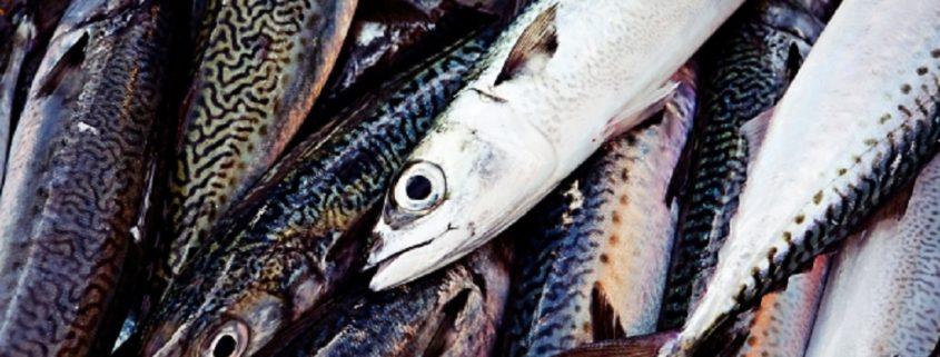 魚の生臭い臭い
