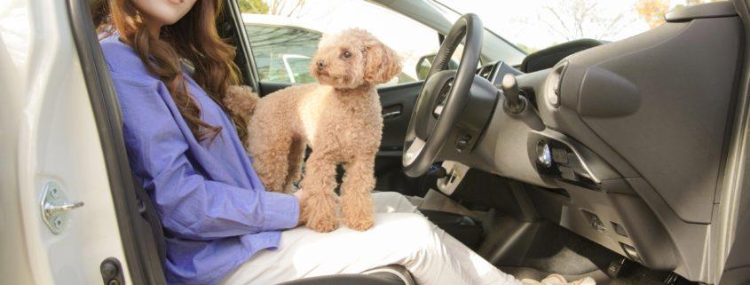 ペット臭のする車