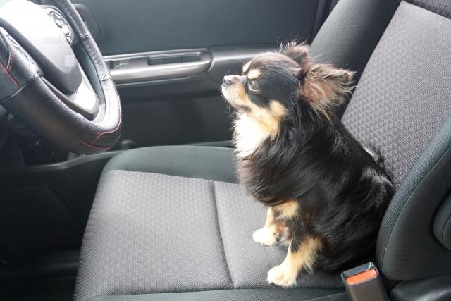 車内に入り込むペットの毛